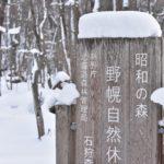 冬の野幌森林公園を散策、エゾリスに会う
