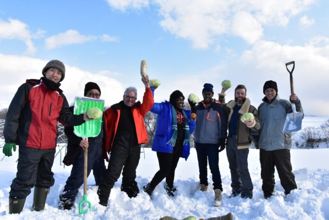岩字地区の冬のモニターツアー3〜共和の國本農園で雪の下野菜掘りと試食
