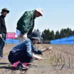 恵庭市の吉田農場で手ぶらでアスパラ狩り体験がスタートする