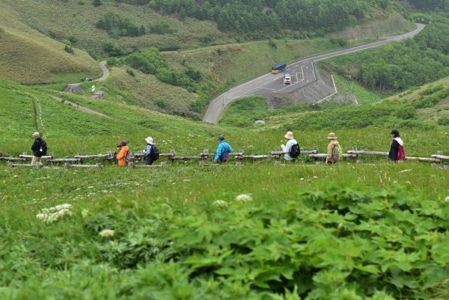 「花の浮島」礼文島を歩いて実感できる「桃岩展望台コース」を歩く