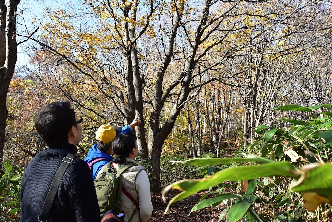 「エコツアーズ札幌」の藻岩山トレッキング