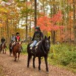苫小牧で乗馬、カナディアンキャンプ北海道・乗馬クラブリーフ